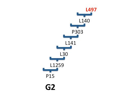 G2-L497