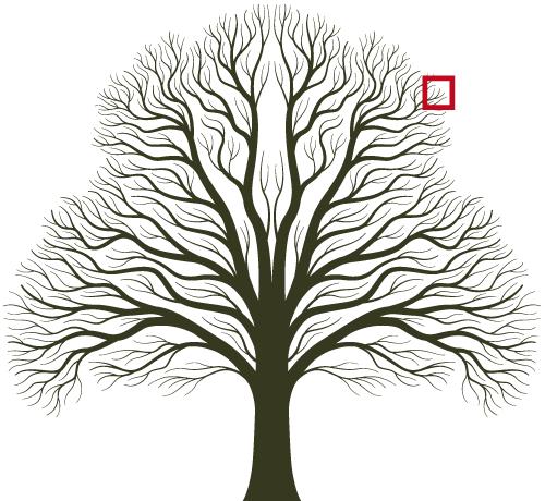 Träd med ruta som visar Buresläktens gren